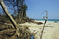 INDIA, Andaman and Nicobar Islands, Little Andaman, Tsunami disaster destruction at beach uprooted tree / IND Andamanen und Nikobaren, Insel Little Andaman , Tsunami Zerstoerung am Strand, entwurzelte Baeume