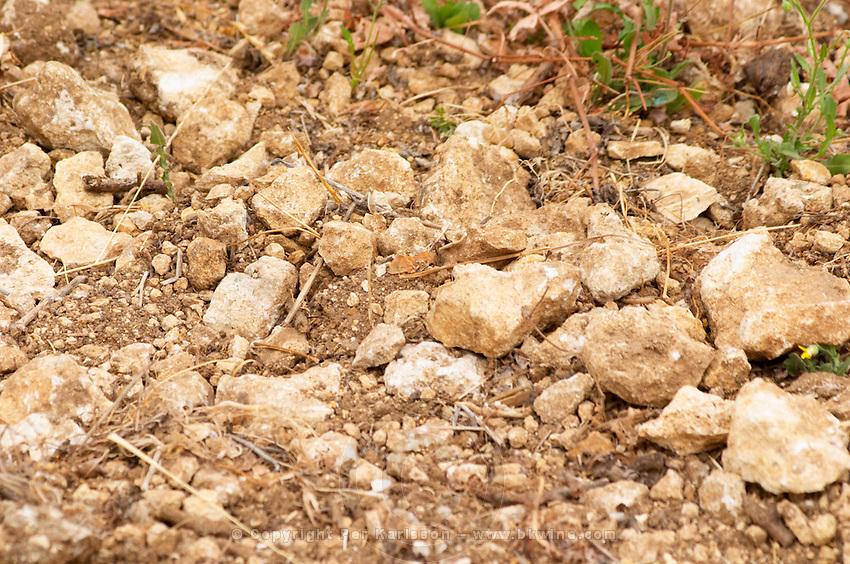 Prieure de St Jean de Bebian. Pezenas region. Languedoc. Young Roussanne vines in calcareous soil in the area of Frigolas. Terroir soil. France. Europe. Vineyard. Soil with stones rocks. Calcareous limestone.
