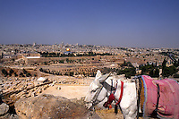 Donkey on mountain overlooking the historical important city of Jerusalem Israel