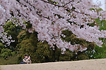 A woman takes a photo of cherry blossoms in Tokyo, Japan, April 5, 2016.  (Photo by Yuriko Nakao/AFLO)