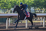 SHA TIN,HONG KONG-DECEMBER 09: Elliptique,trained by Andre Fabre,exercises in preparation for the Hong Kong at Sha Tin Racecourse on December 9,2016 in Sha Tin,New Territories,Hong Kong (Photo by Kaz Ishida/Eclipse Sportswire/Getty Images)