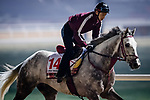 DUBAI, UAE - MARCH 23: Lani on the track at Meydan Race Track in preparation for the Dubai World Cup Race on March 23, 2017 in Dubai, UAE. (Photo by Douglas DeFelice/Eclipse Sportswire/Getty Images)
