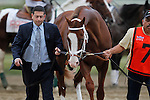 September 21, 2013.  Will Take Charge, trained by D. Wayne Lukas and ridden by Luis Saez, wins the Pennsylvania Derby at  Parx Racing, Bensalem, PA.  Will Take Charge enters the paddock before the PA Derby. ©Joan Fairman Kanes/Eclipse Sportswire