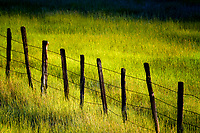 Fence line in tall grass pasture. Near Halfway, Oregon