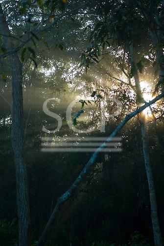 Aldeia Baú, Para State, Brazil. Morning sunlight filtering through the trees of the rainforest.