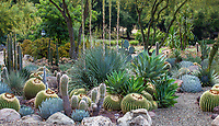 Cactus and succulent garden bed with gravel path - Taft Gardens; Ojai, California