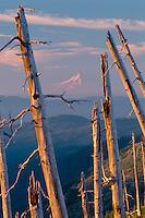 Mt. Hood<br />   from Smith Creek Viewpoint<br /> Mt. Saint Helens National Volcanic Monument<br /> Cascade Range,  Washington