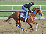 Brown Almighty, trained by Tim Ice,exercises in preparation for the upcoming Breeders Cup at Santa Anita Park on November 1, 2012.