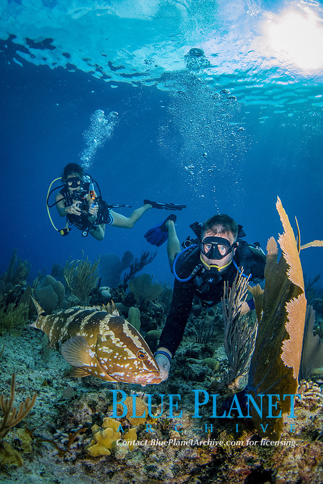 Nassau grouper, Epinephelus striatus, and divers, Bloody Bay Wall, Little Cayman, Cayman Islands, Caribbean Sea, Atlantic Ocean
