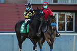 January 22, 2021: Hardly Swayed (5) with jockey Martin Garcia aboard before the Smarty Jones Stakes at Oaklawn Racing Casino Resort in Hot Springs, Arkansas on January 22, 2021. Justin Manning/Eclipse Sportswire/CSM