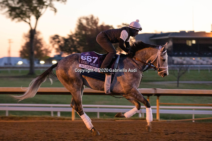 November 4, 2020: Rushie, trained by trainer Michael W. McCarthy, exercises in preparation for the Breeders' Cup Dirt Mile at Keeneland Racetrack in Lexington, Kentucky on November 4, 2020. Gabriella Audi/Eclipse Sportswire/Breeder's Cup/CSM