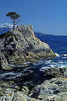 The well known LONE CYPRESS of PEBBLE BEACH, CALIFORNIA - MONTEREY PENINSULA