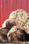 Red barn door with hay rolls Willamette valley Oregon, hay rolls, red barn, barn, door, Oregon, Portland, Cascade Mountain Range, dense evergreen forest, Fine Art Photography by Ron Bennett, Fine Art, Fine Art photography, Art Photography, Copyright RonBennettPhotography.com © Fine Art Photography by Ron Bennett, Fine Art, Fine Art photography, Art Photography, Copyright RonBennettPhotography.com ©