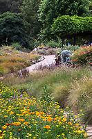 Flowering wildflower meadow Crescent Farm, sustainable demonstation garden; Los Angeles County Arboretum and Botanic Garden