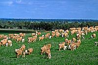 Campo de pasto de ovelhas. Austrália. 1993. Foto de Daniel Augusto Jr.