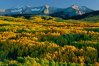 Aspens and East Beckwith Mountain<br /> West Elk Mountains<br /> Gunnison National Forest<br /> Rocky Mountains,  Colorado