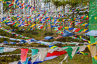 Kikila Pass, near Jakar, Bumthang, Bhutan.  Prayer Flags, Whie or Gray for the Dead, Colored for the Living.
