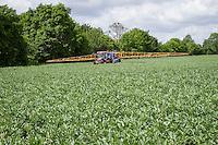 Spraying winter beans - June