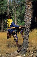 Afrique/Afrique de l'Ouest/Sénégal/Basse-Casamance : Ba récolteur de vin de palme