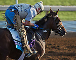 October 27, 2014:  Lawn Ranger, trained by Ken McPeek, exercises in preparation for the Breeders' Cup Juvenile Turf at Santa Anita Race Course in Arcadia, California on October 27, 2014. Scott Serio/ESW/CSM