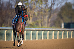 Come Dancing, trained by trainer Carlos Martin, exercises in preparation for the Breeders' Cup Filly & Mare Sprint