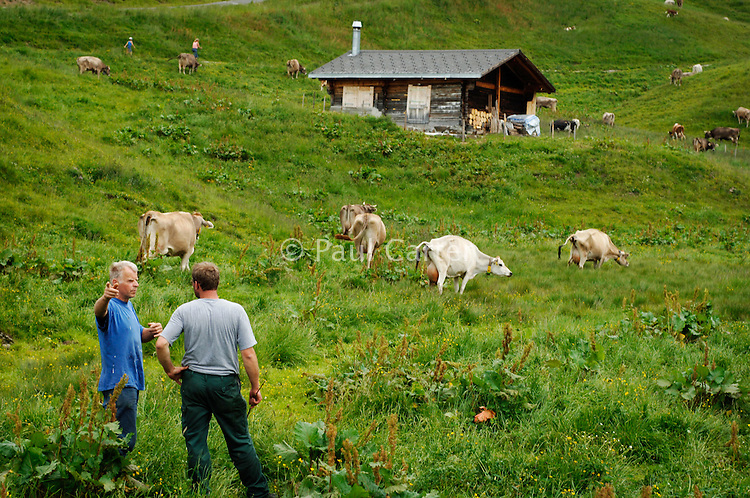 Driving a cow to a higher pasture...Cowherd and cheesemaker spends 100 days in the summer, high up in the mountains, tending cows and pigs and making cheese at Balisalp and Käserstatt near Meiringen, Switzerland.