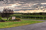 Dramatic cloudy skies make for a dramatic vineyard view, from the front of the winery at Swedenburg Estate Vineyard.  (HDR image)