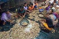 Asie/Inde/Maharashtra/Bombay : Sassoon Docks - Le Marché aux poissons - Eplucheuses de crevettes