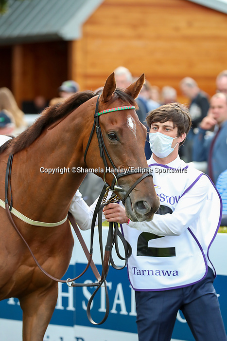 September 11, 2021: Tarnawa (IRE) #2 in the walking ring prior to the Group 1 Irish Champion Stakes on the turf on Irish Champions Weekend at Leopardstown Racecourse in Dublin, Ireland on September 11th, 2021. Shamela Hanley/Eclipse Sportswire/CSM