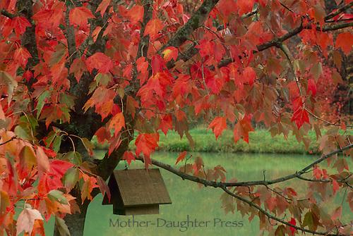 Birdhouse in red maple