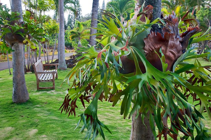 Bromeliad on trees. Na Aina Kai Botanical Gardens. Kauai, Hawaii
