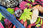 Fall color.  Red leafs, mushroom, honeycomb and more photographed in studio.