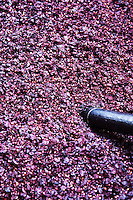 Grape press residue: skins and pips after pressing. Albet i Noya. Penedes Catalonia Spain