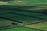 Açores, Ilha de Terceira, 2005