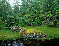 Tongass National Forest, in Southeast Alaska, is part of the nation's largest temperate rain forest.   Photo shows small scene along small unnamed pond.