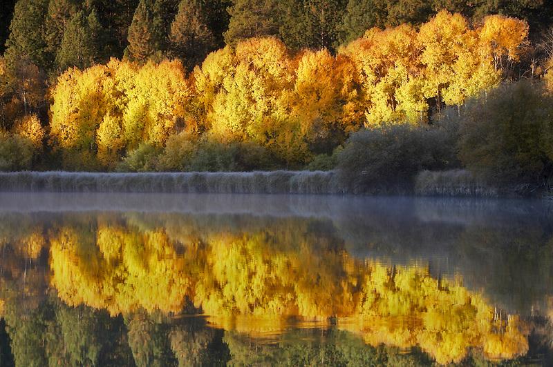 Fall colored aspenn trees and Deschutes River. Central Oregon