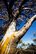 Image Ref: T061<br />