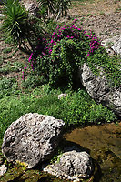 Sperlonga: At the beginning of the large beach towars South, some lively vegetation, with little palms and purple flowers, near the meander of a little beach brook of brackish water.