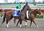 30 January 2009: Capt. Candyman Can, with Julien Leparoux in the saddle, in the post parade before winning the 53rd running of the Grade 2 Hutcheson Stakes for three-year-olds at Gulfstream Park in Hallandale, Florida.