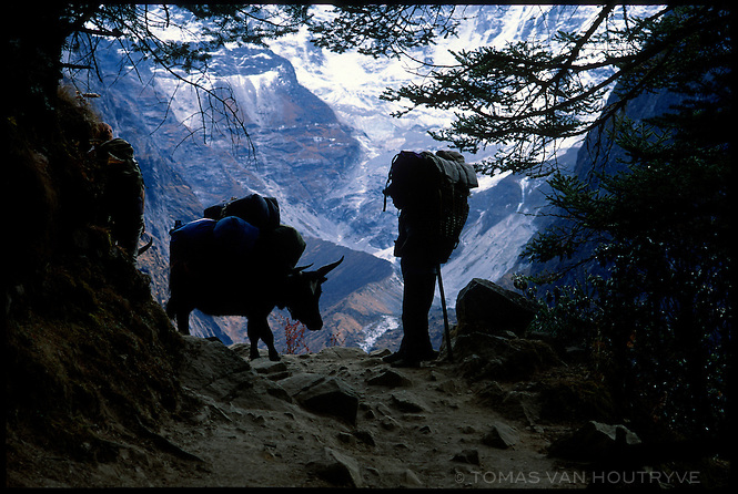 A yak and a porter cross paths on the high trails of the Solu Khumbu Everest region in Nepal.