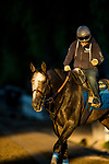 ARCADIA, CA - OCTOBER 22: Arrogate with Dana Barnes comes off the track at Santa Anita Park on October 22, 2017 in Arcadia, California. (Photo by Alex Evers/Eclipse Sportswire/Getty Images)
