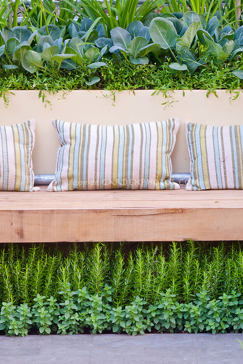 Garden bench with pillows placed over fragrant herbs rosemary Rosmarinus and Marjorum, and using vertical gardening raised bed at top for vegetable cabbage for great garden idea