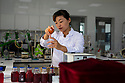 China - Ningxia - A wine technician analysing the grape juices from the latest harvest in the laboratory of Pernod Ricard Winery. <br />