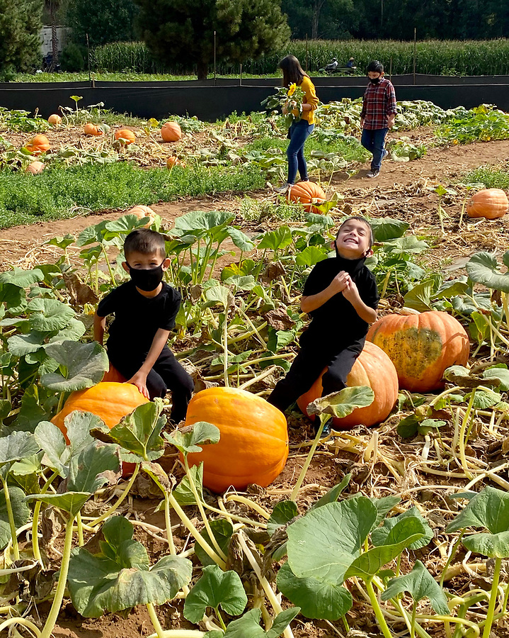 the boys on pumpkins in a pumpkin patch