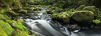 Korokoro Stream with moss covered boulders, Te Urewera, Hawke's Bay, North Island, New Zealand, NZ