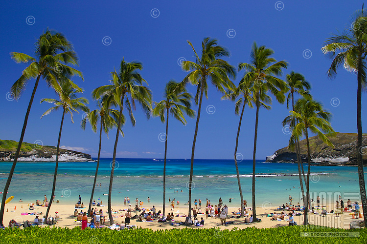 Hanauma Bay is one of Oahu's most popular attractions with it beautiful palm tree lined beach and warm blue waters full of colorful fish.. A snorkelers paradise. Located on the southeastern coast of Oahu.