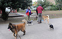 Dog Parks