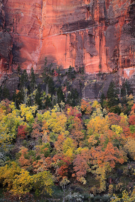 Autumn has arrived at Zion National Park, Utah