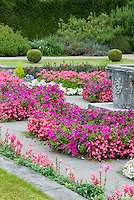 Low allergy annual pink bedding plants color theme Geranium, Begonia, Petunia, snapdragons  in shades of pinks and purples and white, gorgeous slightly sunken garden