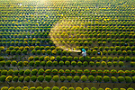Workers water thousands of flowers in Sa Dec flower village by Khanh Phan